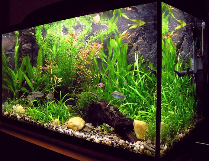 AQUARIUM: List of freshwater aquarium plant species