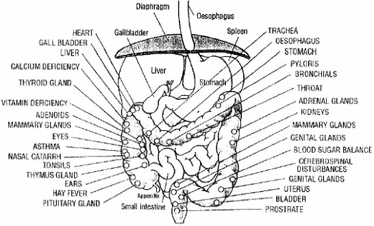 Digestive System Diagram ~ Digestive Diseases