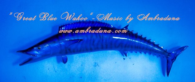 """Great Blue Wahoo"" - briiliant music!"