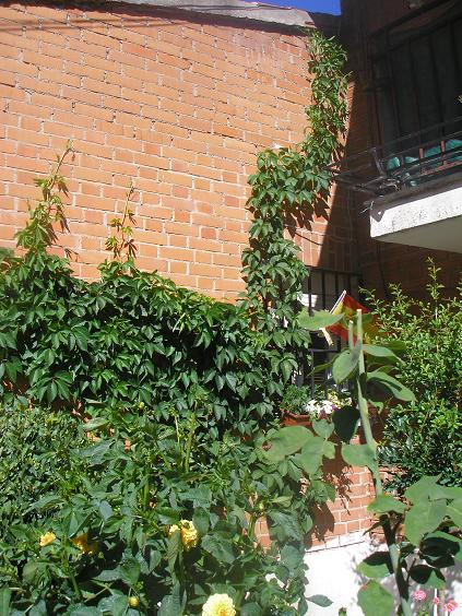 El jardin de pepa enredaderas y trepadoras for Vivero 4 estaciones