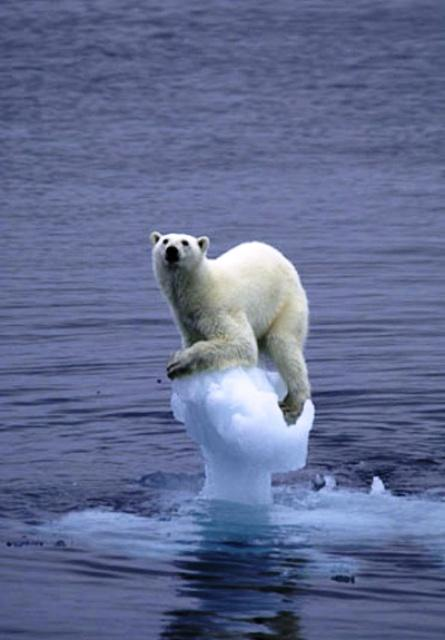 Global Warming And The Impact on Wildlife: Articles O Karmic