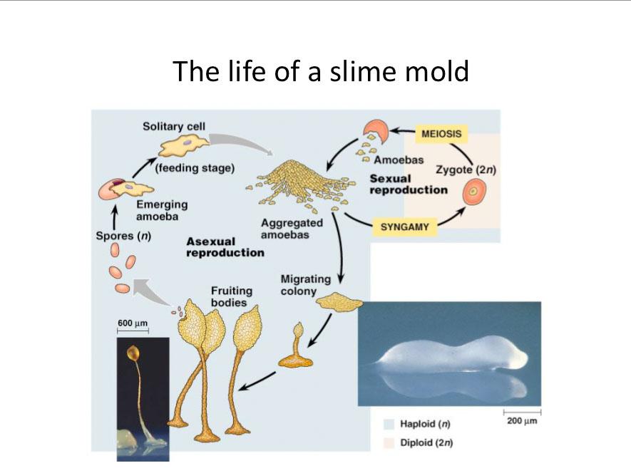 \m/kwiss\m/: april 2010  mold diagram #9