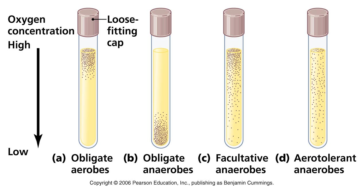 Cultivation of Aerobic and Anaerobic Bacteria