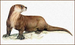 lobo gargantilla Pteronura brasiliensis mamiferos de sudamerica en peligro de extincion mamiferos de Argentina en peligro de extincion