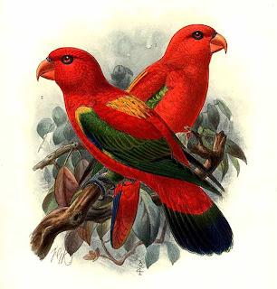 lori garrula Lorius garrulus aves de Indonesia en extincion