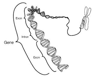 Biología Molecular Marzo 2009
