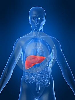 cancer hepatic secundar
