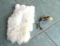 Conejo habana - Razas de Conejos - mundo-pecuario.com
