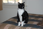 Patch - RIP our sweet, loving fur baby and one-eyed wonder cat.