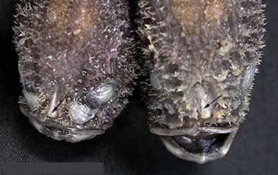 [coffinfish.jpg]