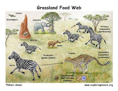 African Elephant Food Chain Diagram 2004 Jeep Grand Cherokee Brake Light Wiring Elephants Web