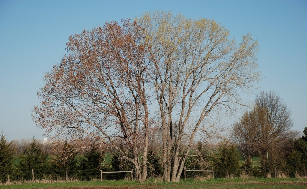 Gaia Garden A Telling Time For Cottonwoods