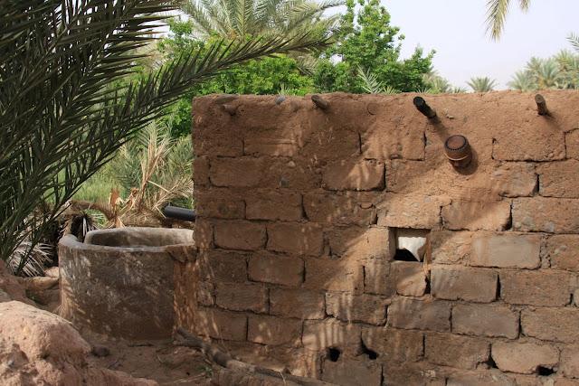 AGRICULTURA DE OÁSIS | A agricultura tradicional vista nos oásis de Marrocos