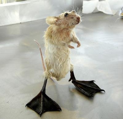 IMAGE(http://4.bp.blogspot.com/_crPBCZok0RE/SuBqMigrBPI/AAAAAAAAQeg/wCBeHwkgrHQ/s400/creepy-taxidermy-24.jpg)