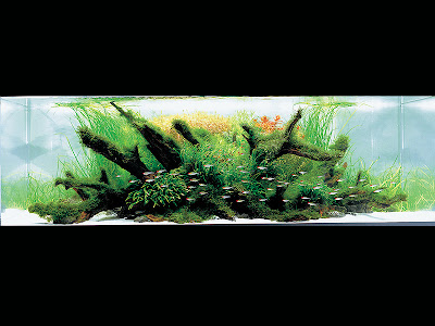 Aquatic Eden - Aquascaping Aquarium Blog