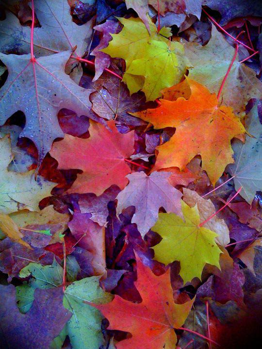 Plant Preview: Brilliant Tree Leaf Color