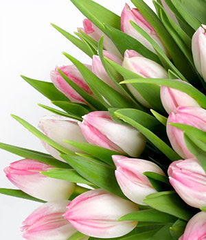 Flowers Pink Tulips Bouquet