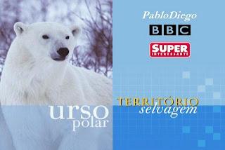 territorio selvagem urso polar