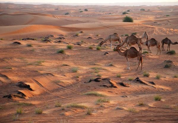 Desert Safari: Bukan Buat yang Gampang Mual