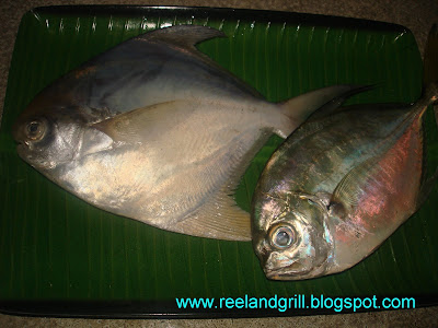 Pangat Na Pampano At Talakitok Pompano And Trevally In Lime Juice And Spices By Reel And Grill