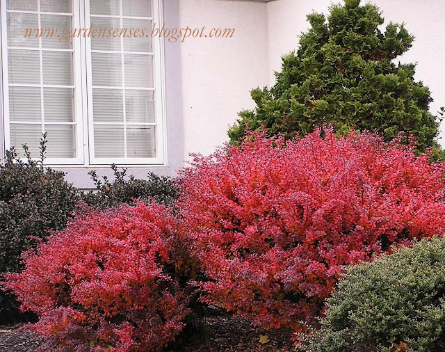 color tree bush - photo #7