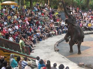 show+gajah.JPG