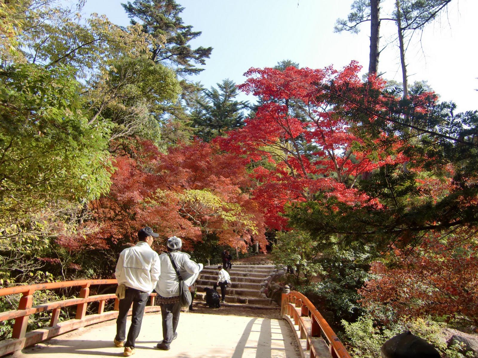 日本各地紀行: 11月の紅葉谷公園