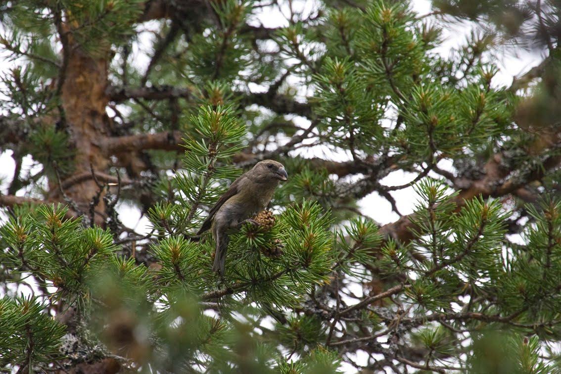 Värriön luontopäiväkirja - Varrio nature diary: July 2010