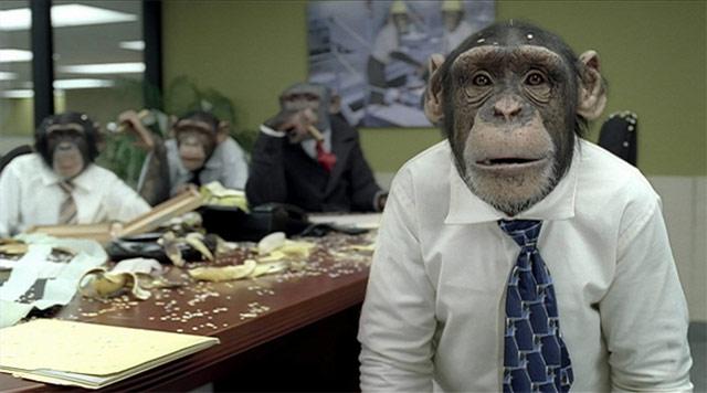 careerbuilder_chimp-749650.jpeg