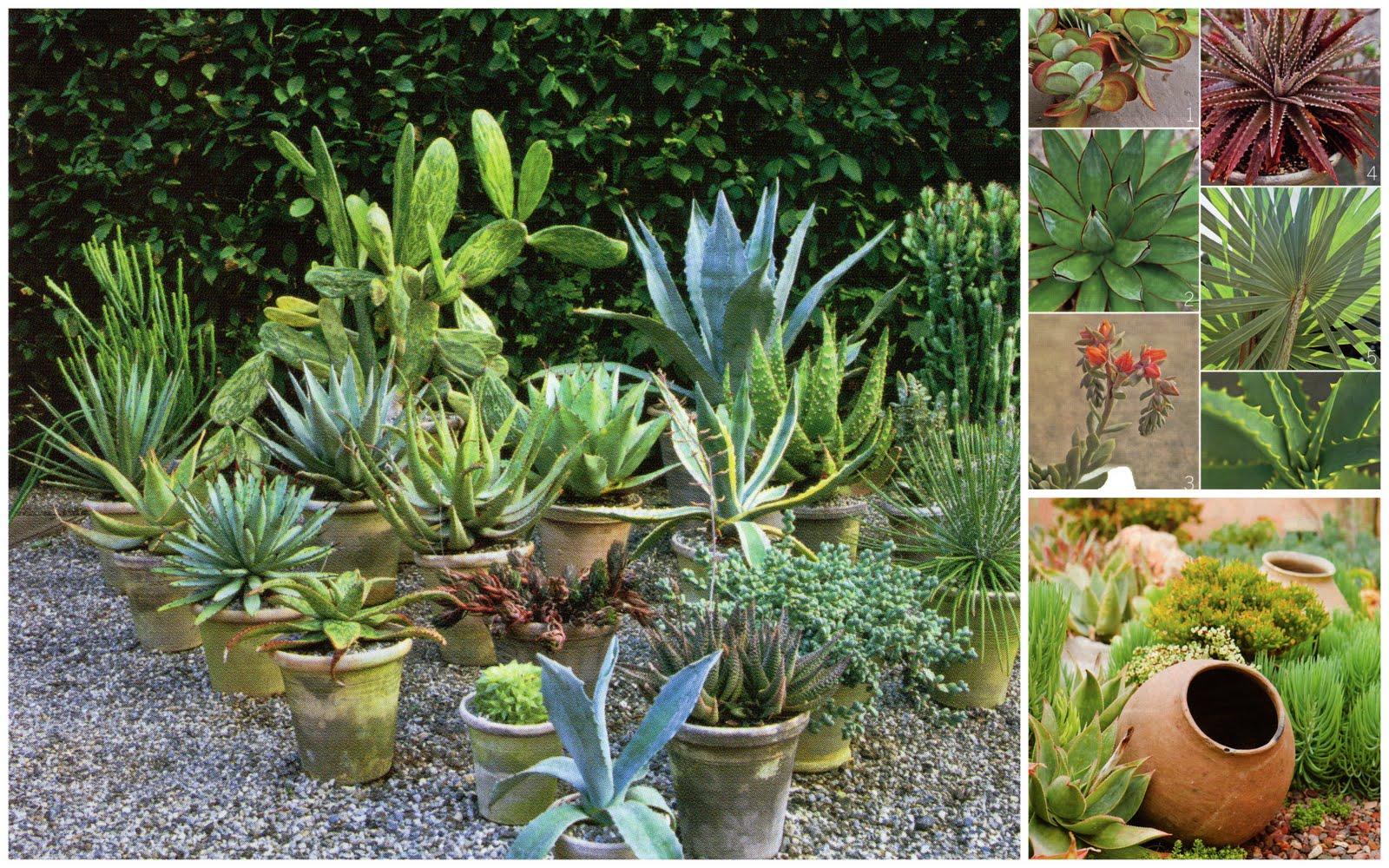 Modern Planters And Pots Stylized Design Succulent Succulents
