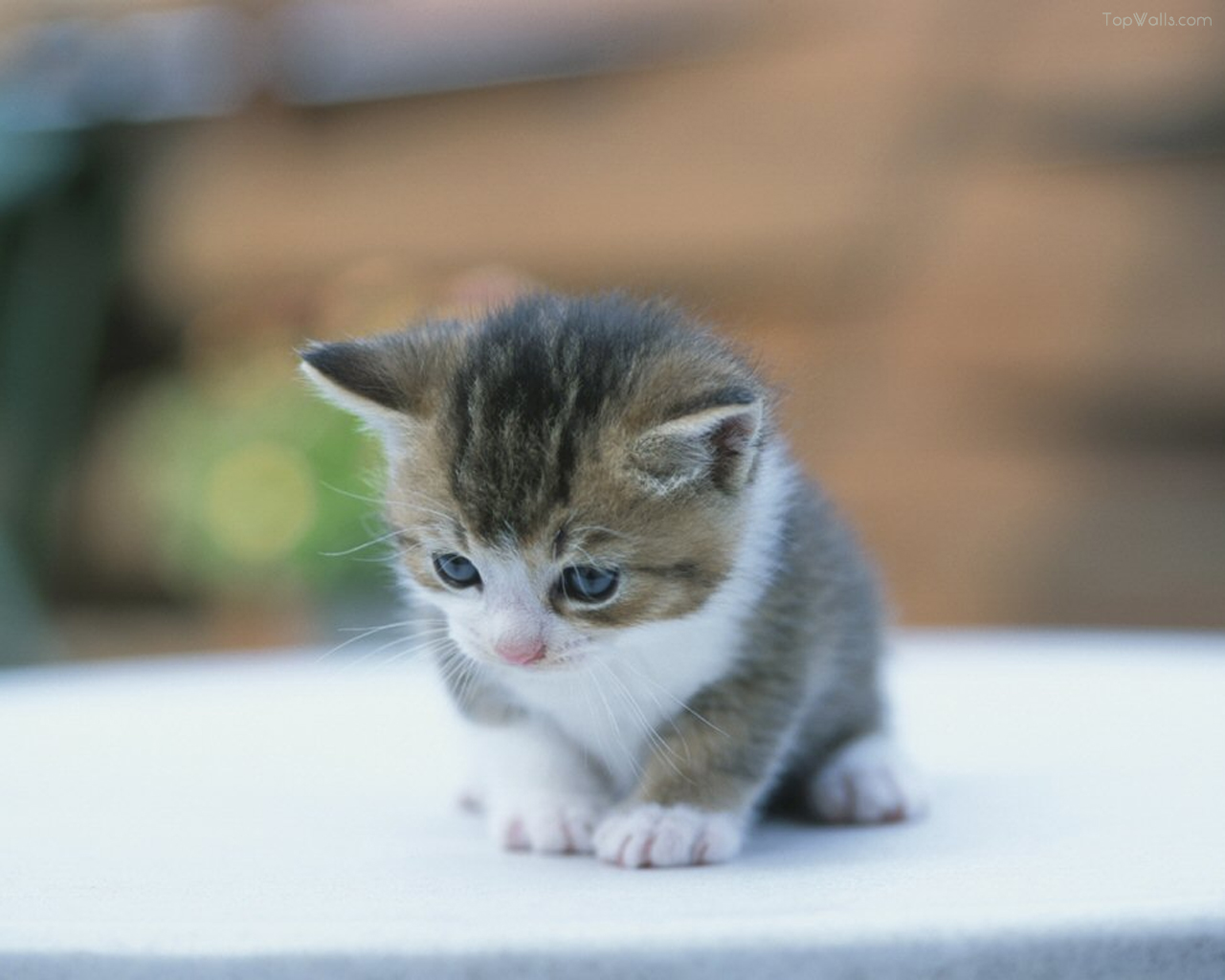 Ivanildosantos Gambar Kucing Yang Lucu
