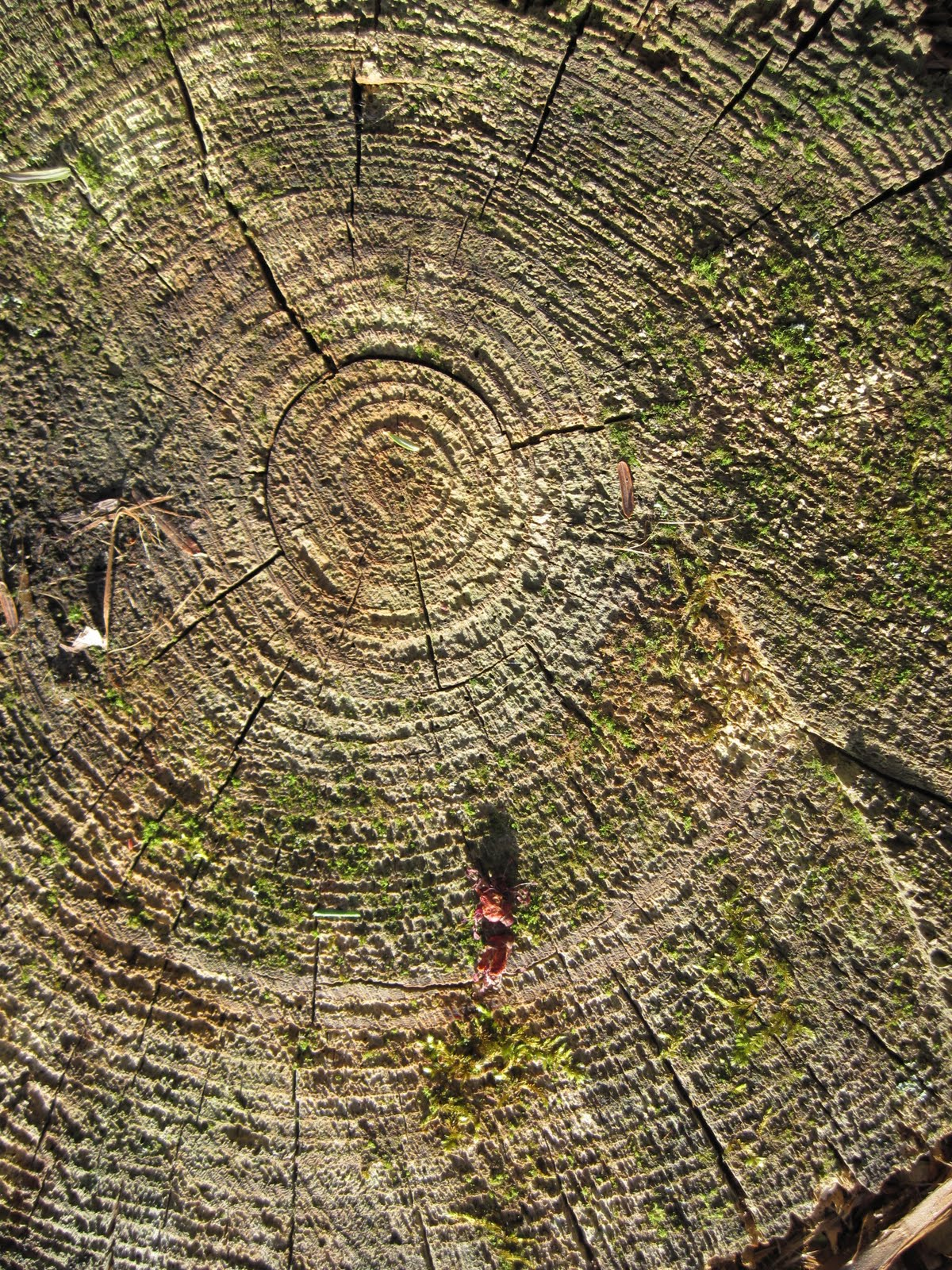 Sacred Circles A Guide To Creating Your Own Women S: RavenWood Forest: Another Day Of Stones And Spirals