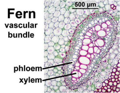 Biology: Cell Structure and Functions