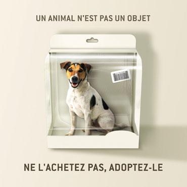 Ne l'achetez pas, adoptez-le