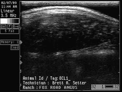 From Amsterdam to Animal Science Beef Unit Ultrasound