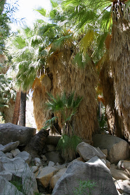 2008-06-30_15_Joshua Tree National Park_CA_b.jpg