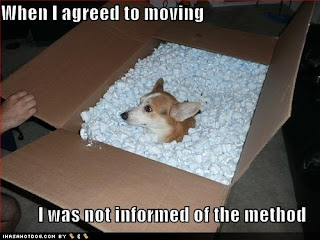 Moving With Your Dog