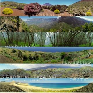 Contreras ecologia y ecosistemas for Medio en el que habitan los arboles