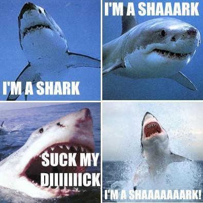 IMAGE(http://4.bp.blogspot.com/_eLkHhhY7c24/RzneZyIJSAI/AAAAAAAABrc/-DVtAxMhc04/s400/shark.jpg)