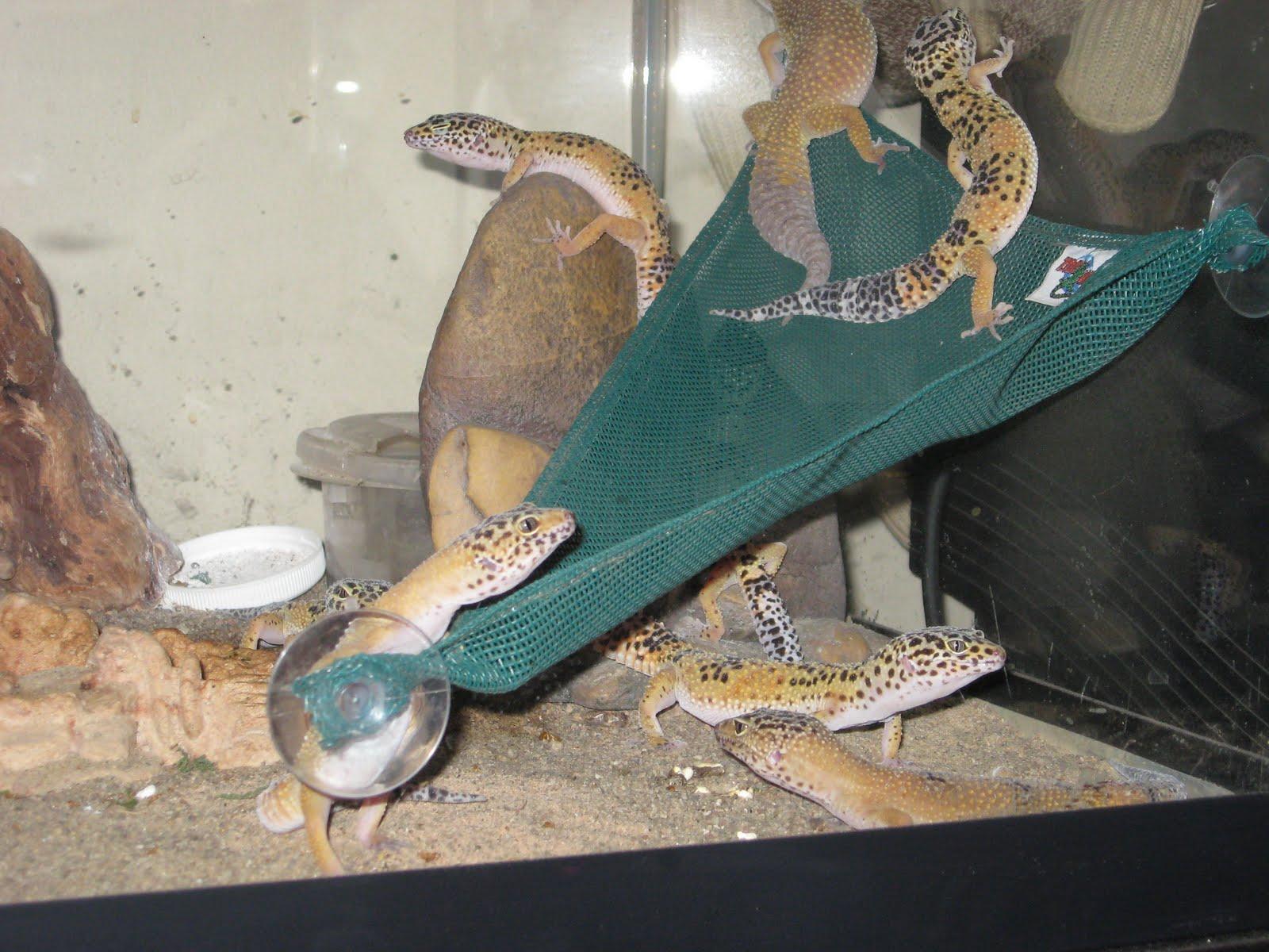 The Lizard Diaries Updates In The Lizard Household