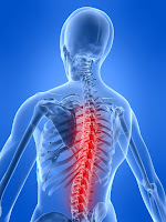 Pain in the spine Vital Force Chiropractic St Louis