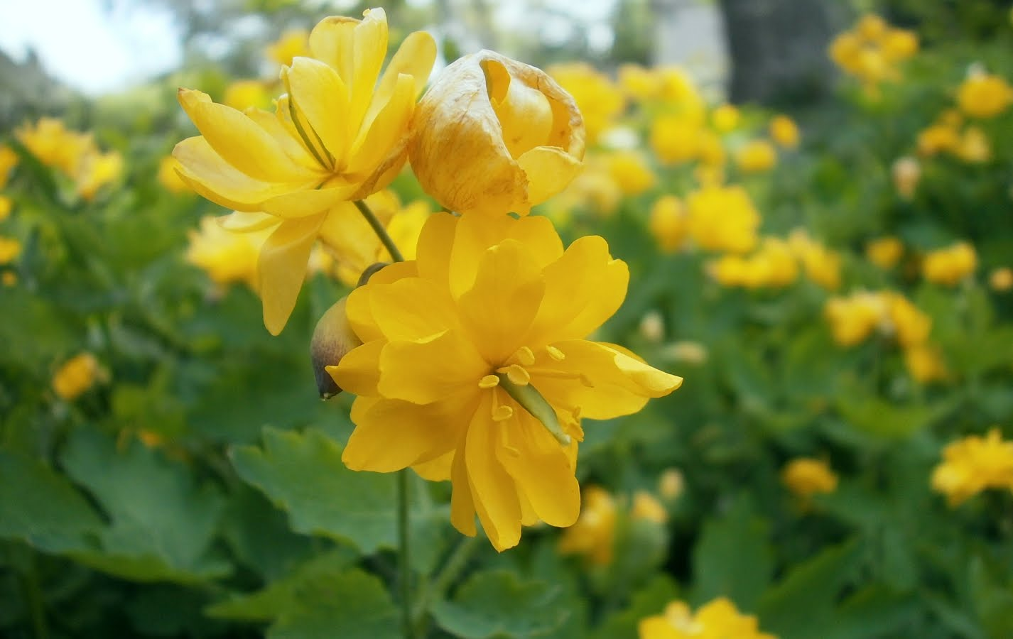 Awesome Yellow Flowers Names With Images Top Collection Of