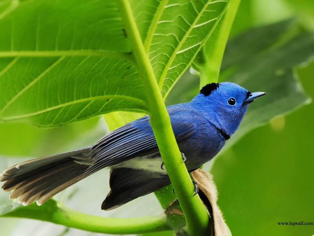 All Photo Beautiful Birds