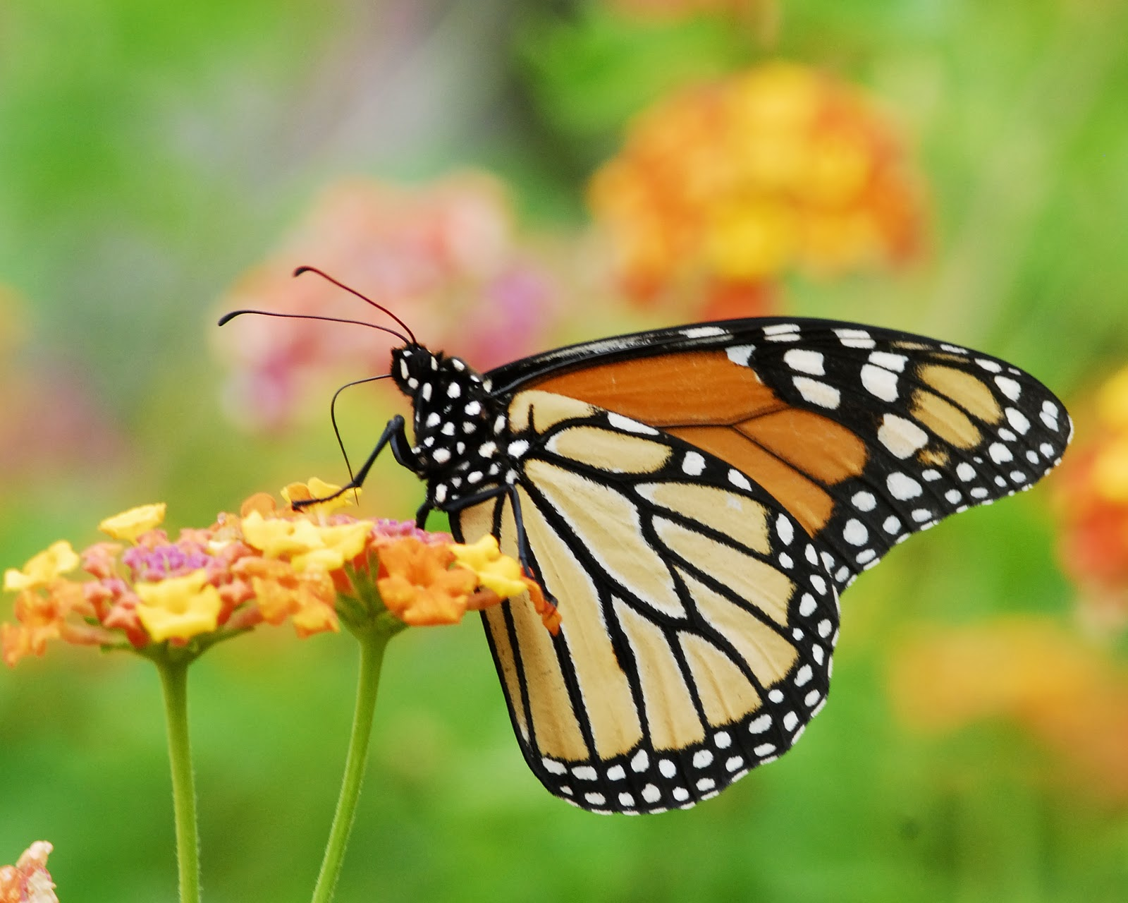 God S Natural World New Life In Christ Butterfly