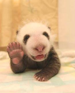 [Obrazek: panda.jpg]