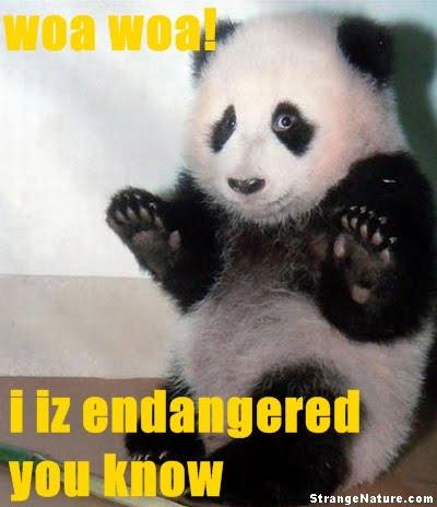 Funny Animals Scared Panda Funny Animal Pictures Strangenature