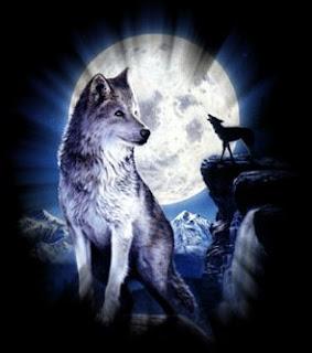 Iphone Wolf Wallpaper შემო მაგარია მგელი