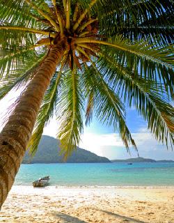 AkuKertasPutih Pokok kelapa  Pokok Manusia
