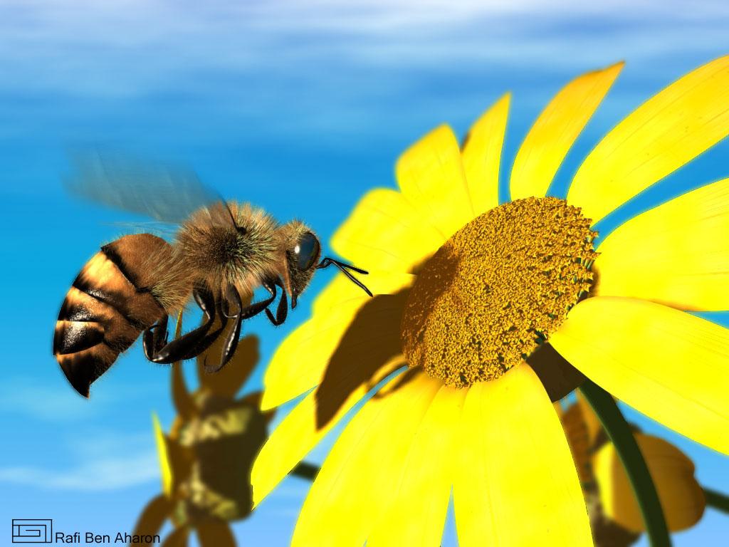 HoneyBee's - photo#33
