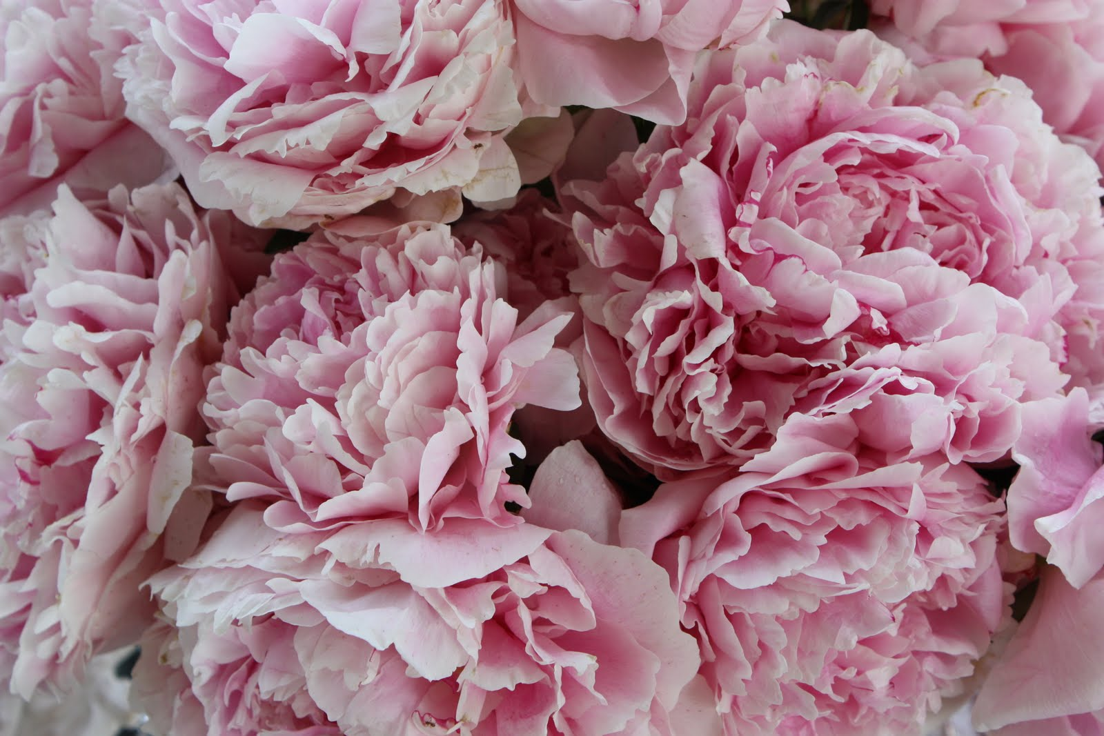 pink peony tablescape and birthday party! - stonegable